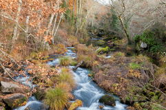 Arenteiro-Fluss Lizenzfreie Stockfotografie
