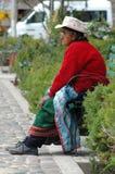 AREQUIPA PERU - FEBRUARI 04: Oidentifierad lokal på de huvudsakliga plommonerna Royaltyfri Foto