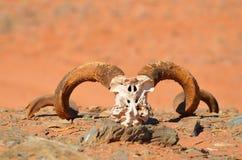 Argali, Horn, Fauna, Terrestrial Animal Stock Photos