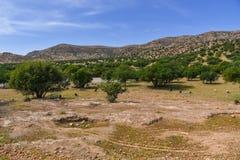 Argan δέντρα και αίγες, Μαρόκο Αφρική Στοκ Εικόνες