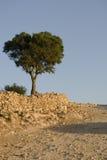 argan δέντρο Στοκ Εικόνα