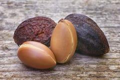 Argan τα φρούτα (spinosa Argania), καρύδια, αυτοί οι σπόροι χρησιμοποιούνται στο cosme Στοκ φωτογραφίες με δικαίωμα ελεύθερης χρήσης