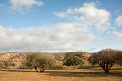 Argan bomen Royalty-vrije Stock Foto