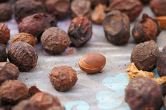 Argan fruits (Argania spinosa) Stock Photo