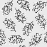Argan nut oil seamless pattern. Seamless pattern of argan vector drawing nut oil, fruit, berry, plant. Hand drawn engraved vector sketch etch illustration Stock Photos