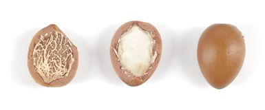 Argan nuts in a row on a white background. Stock Image