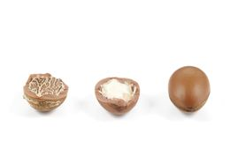 Argan nuts in a row on a white background. Stock Images