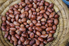 Argan oil nuts Stock Image