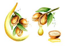 Argan oil set. Watercolor hand-drawn illustration royalty free illustration