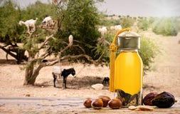 Argan olie en vruchten met argan boom op de achtergrond royalty-vrije stock afbeeldingen