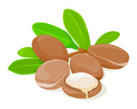 Argan seeds and leaves. Royalty Free Stock Photography