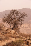 Argan tree. In the Atlas mountains, Morocco Stock Photo