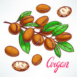 Argan tree branch Royalty Free Stock Photo