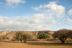 Argan trees. (Argania spinosa) in the high Atlas mountains of Morocco Royalty Free Stock Photo