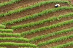 Argapura Indonésia 2018: Fazendeiro que trabalha em sua plantação da cebola na manhã após o nascer do sol, Java ocidental, Indoné fotografia de stock royalty free