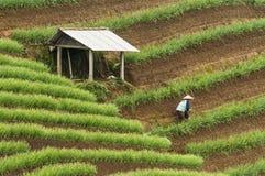 Argapura Indonesia 2018: Granjero que trabaja en su plantación de la cebolla por la mañana después de la salida del sol, Java del imagen de archivo libre de regalías