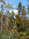 Arge mistel på drie i nationalparkPlitvice sjöarna i CR Royaltyfri Fotografi