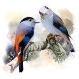 Argent-breasted Broadbill Image libre de droits