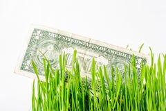 Argent croissant - billets d'un dollar dans l'herbe Image stock
