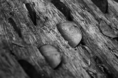 Argent dans les arbres Photographie stock libre de droits