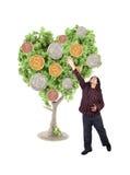 Argent s'élevant sur l'arbre photographie stock libre de droits