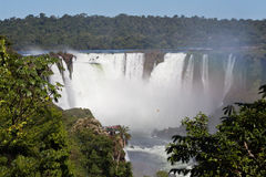 argentina Brazil robi Foz iguassu Fotografia Stock