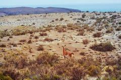 Argentina coast. Patagonian Atlantic Coast in Argentina royalty free stock images