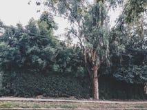 Argentina för Las rosasgata fattig grannskap i Argentina Royaltyfri Bild