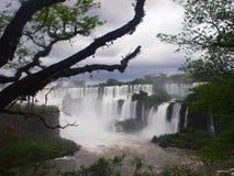 argentina faller iguazuen Fotografering för Bildbyråer