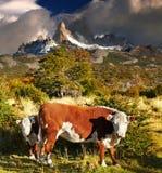 argentina fitz góry patagonia Roy Zdjęcie Stock