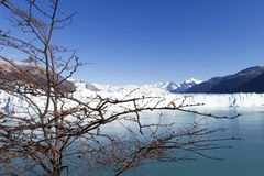 argentina glaciärmoreno perito Fotografering för Bildbyråer