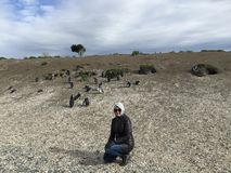 Penguins on Martillo Island posing for tourists stock photos