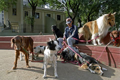 Argentine dog sitter in the city Buenos Aires Royalty Free Stock Photography