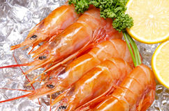 Argentine red shrimp Royalty Free Stock Photography