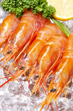 Argentine red shrimp Royalty Free Stock Images