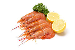 Argentine red shrimp Stock Photography