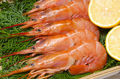Argentine red shrimp Royalty Free Stock Image