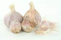 Argentinean Garlic Bulbs. Stock Image
