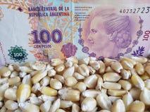 Argentinië, maïs producerend land, droge graankorrels en Argentijns bankbiljet van 100 peso's royalty-vrije stock fotografie