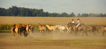 Argentinian cowboys and horses Royalty Free Stock Image