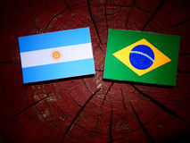 Argentinian flag with Brazilian flag on a tree stump isolated Royalty Free Stock Photos