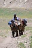 Argentinische Mann- und Eseltragetaschen beim Aconcagua, Arge Lizenzfreies Stockbild