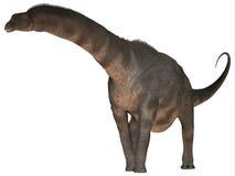 Argentinosaurus au-dessus de blanc Photographie stock