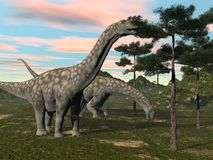 Argentinosaurus dinosaur eating tree - 3D render Royalty Free Stock Image