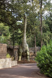 Argentinosaurus display model in Perth Zoo Stock Image