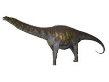 Argentinosaurus on White. Argentinosaurus was a titanosaur sauropod dinosaur from the Cretaceous epoch in Argentina Stock Images