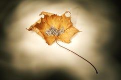 Argento ed oro Fotografie Stock Libere da Diritti