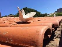 Argile de pigeon sur le dessus de toit - Vinhedo Images libres de droits