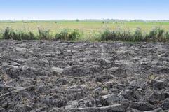 Argilla di recente arata con il paesaggio del polder Fotografie Stock