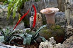 Argilla di vaso nel giardino Fotografia Stock